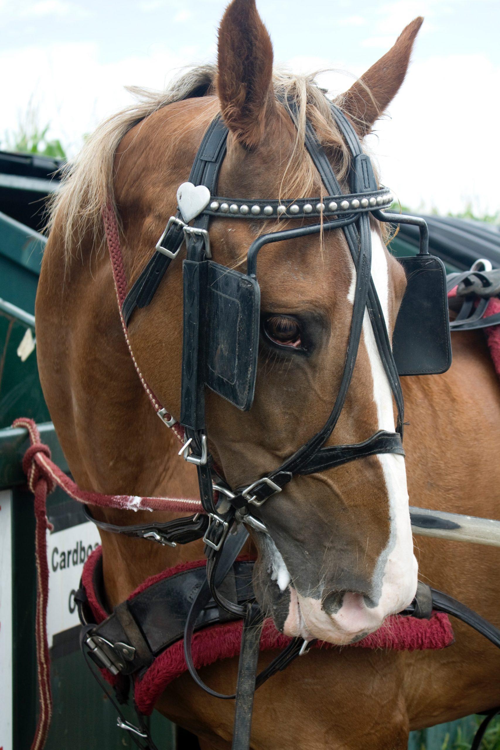 Sklep jeździecki – jak zrobić go dobrze?